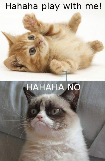 Grumpy cat eats cereal by 8loodyrain on deviantART