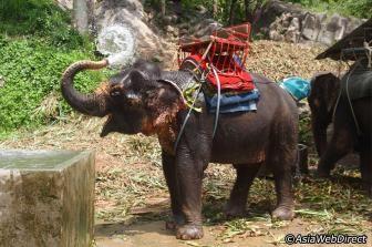 5 Places to Ride an Elephant in Phuket - Phuket.com Magazine
