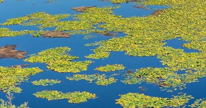 Τοπίο μοναδικής ομορφιάς! Η μεγαλύτερη σε έκταση λίμνη με νούφαρα στην Ελλάδα που.. δεν θυμίζει Ελλάδα