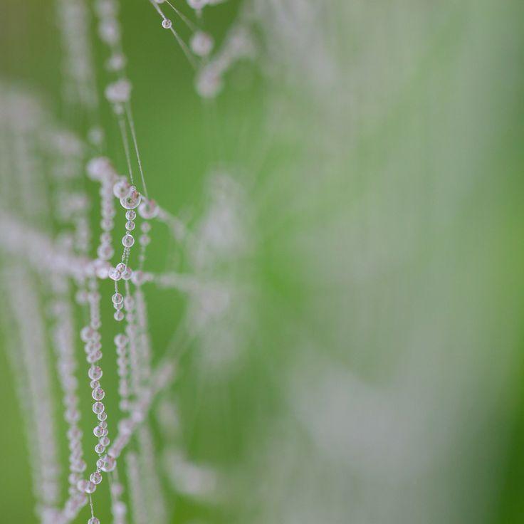 Spiderweb by Karen-Louise Clemmesen on 500px