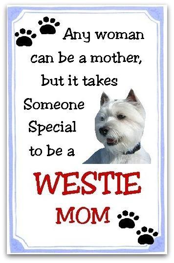 https://i.pinimg.com/736x/3c/97/3f/3c973fbe8b2da96c613819e54aec14ef--westie-dog-case.jpg