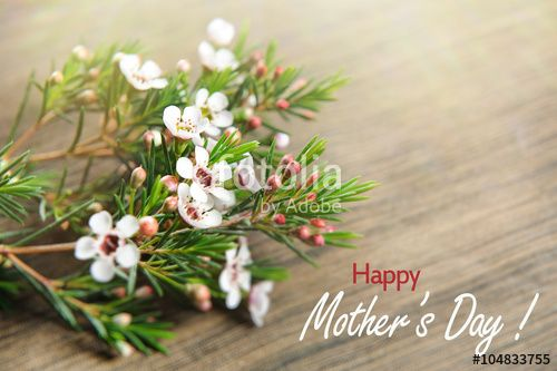"""Download the royalty-free photo """"Mothers day card with flowers. white spring flowers for mother day. Mothers day background and mother day flower. Mothers day gift. """" created by stillforstyle at the lowest price on Fotolia.com. Browse our cheap image bank online to find the perfect stock photo for your marketing projects!"""