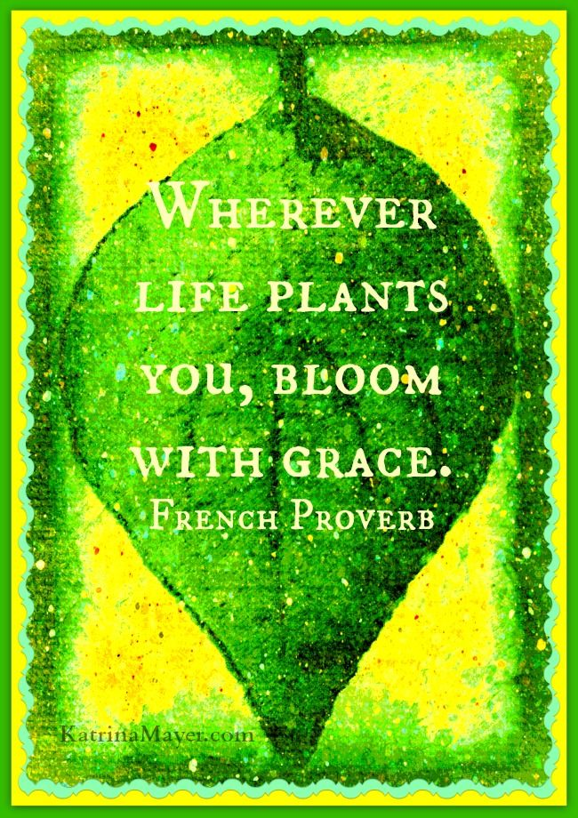 Wherever life plants you, bloom with grace. French Proverb