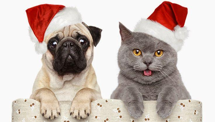 Christmas treats for your fur babies ... Kitties Christmas Wishlist