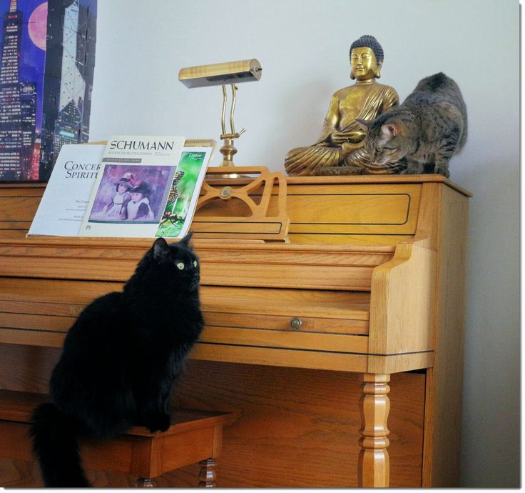 Dogs are well-known for their loyalty, like staying at the tombs of their owners. Cats seems to be more spiritual. I have seen quite a few video of cats doing mediation and even r…
