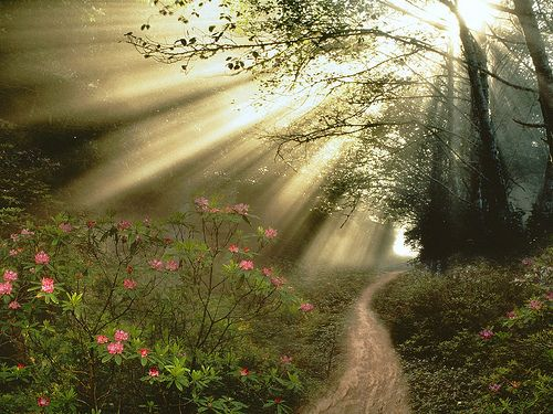 Looks like many an early morning hikes I've taken here in the Smoky Mountains. Beautiful.
