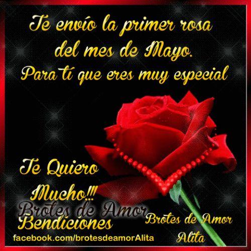 Brotes de Amor: Primer rosa de Mayo