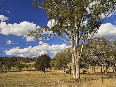 Countryside Near Towoomba, Queensland, Australia, Pacific