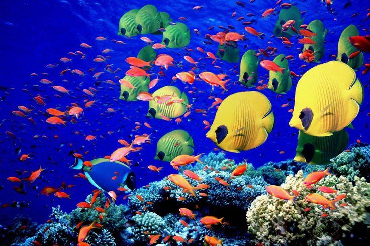 Caribbean Sea in 4K | Карибское Море в 4K