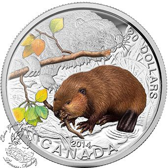 Coin Gallery London Store - Canada: 2014 $20 Baby Beaver Coloured Pure Silver Coin, $99.95