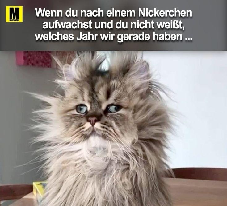 Du lustig witzig Sprüche Bild Bilder nach einem Nickerchen Katze – Steve Wildi