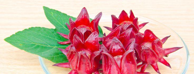 beneficios de la flor de jamaica para la diabetes