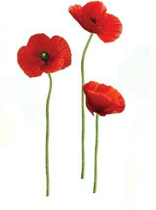 Poppy tattoo idea..this seems prefect