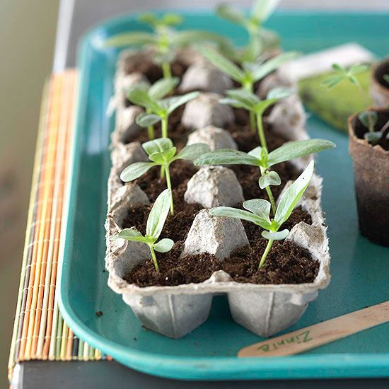 Start the season extra early with these frost-tolerant cool-season vegetables.