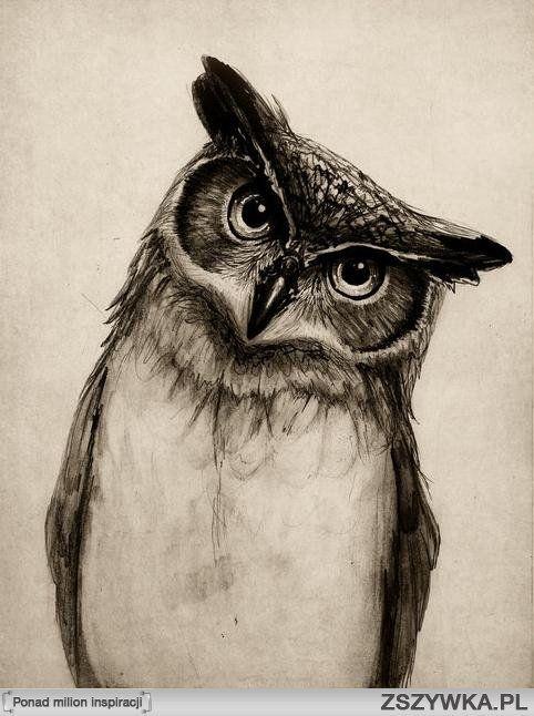 owl #drawing #bird #illustration