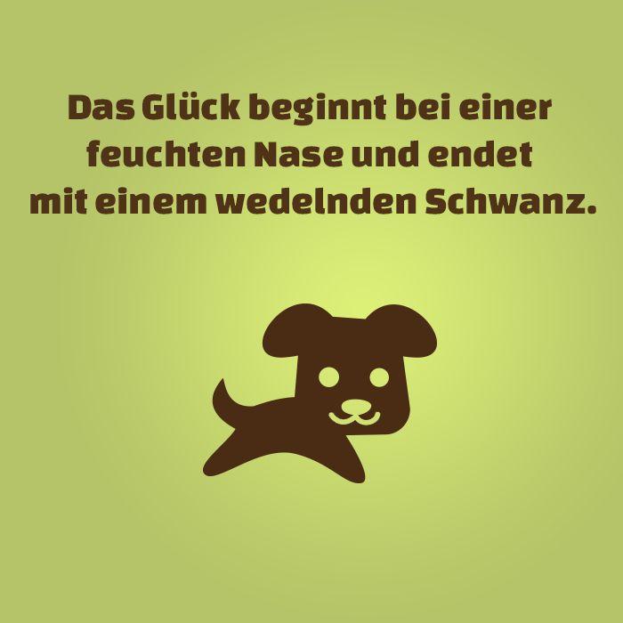 #hunde #dogsplaces