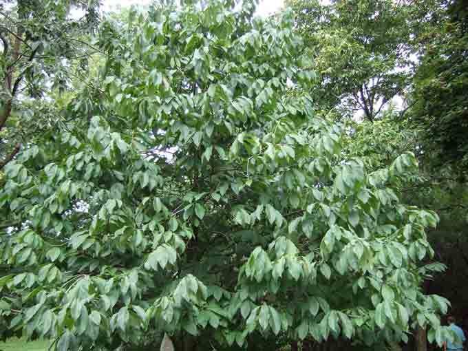 Paw Tree Http Www Veggiegardeningtips Wp Content