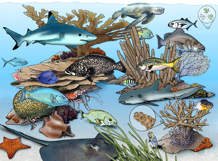 simple coral reef coloring pages - Google Search | Art ...