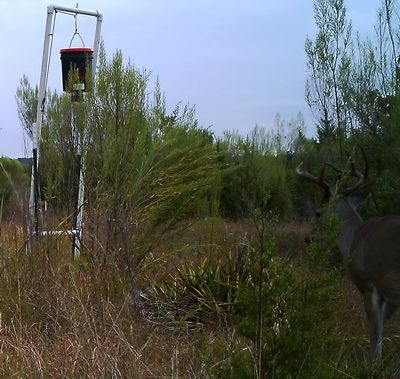 Build/make your own deer feeder
