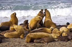 Resultado de imagen para animales que viven en la costa bonaerense