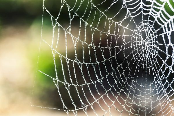 """Bionic spider silk: Researchers have developed a super strong """"biocomposite"""" with the potential to revolutionize numerous industries"""