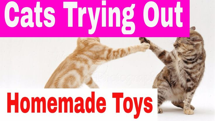 How To Make Toys For Cats - Homemade Toys For Cats - Cat Toys For Indoor Cats