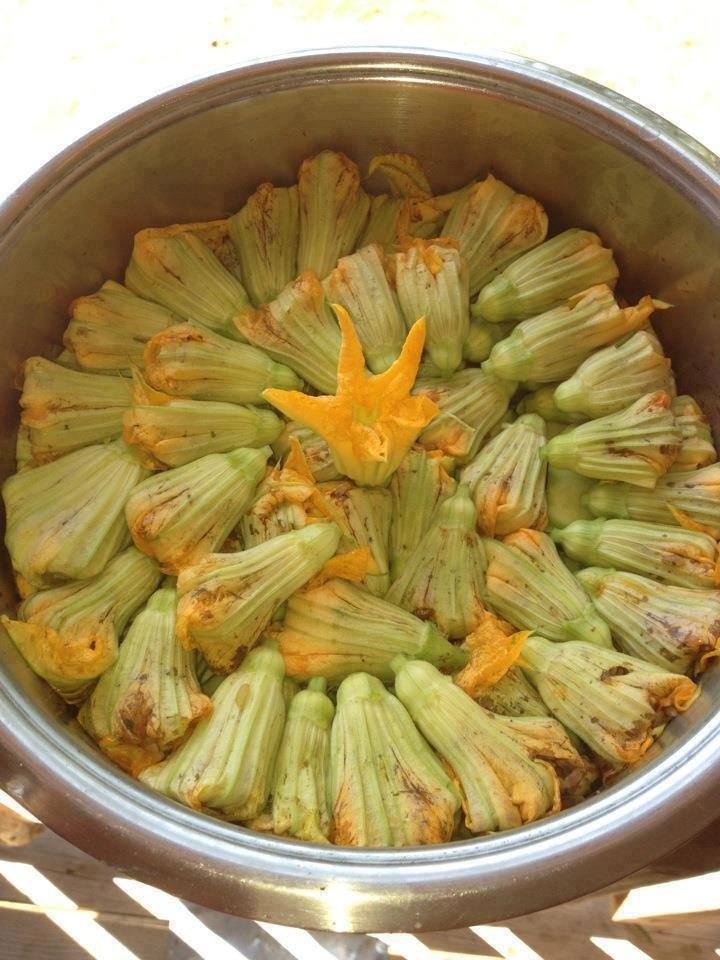 A Cypriot recipe - Kabak çiçeği dolması / Arboriso rice and tomato stuffed Zucchini flowers