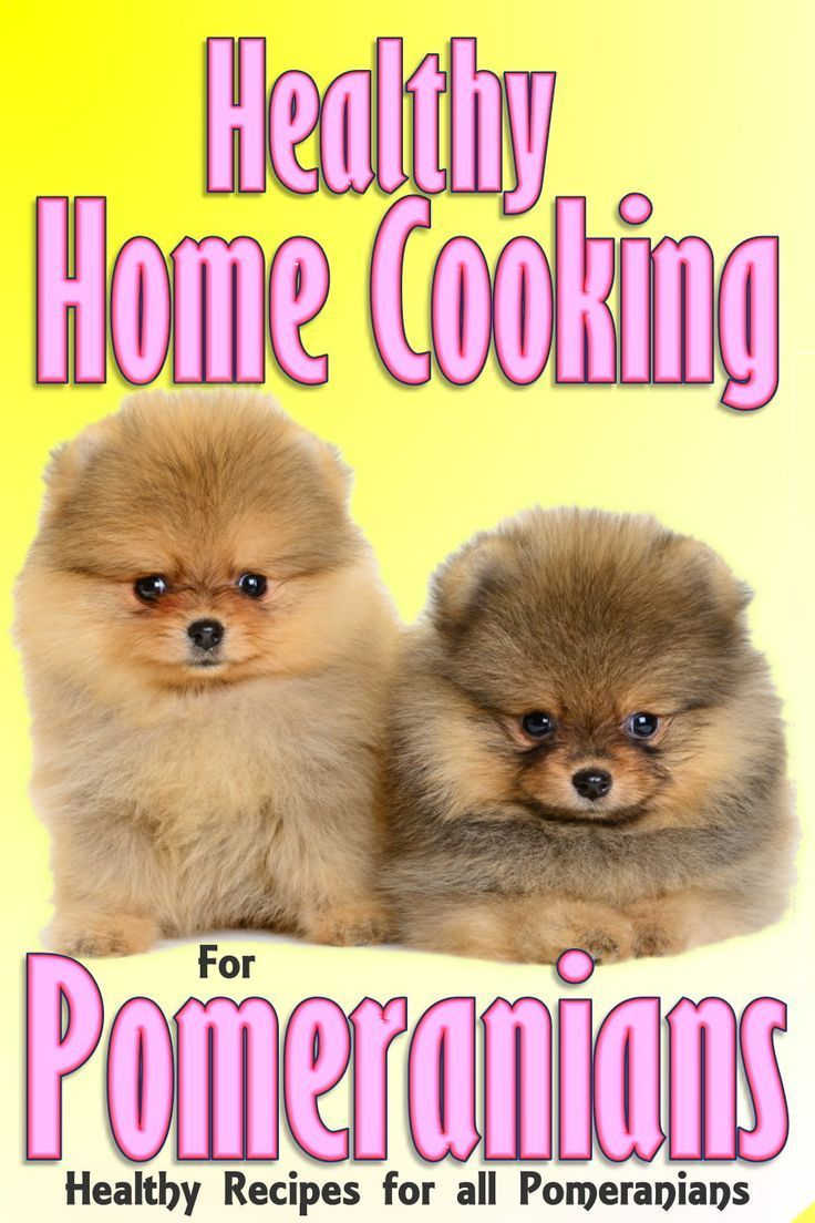 Pomeranian Food Recipes Pomeranian Puppy Make Dog Food Dog Care