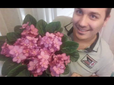 Como Plantar Violetas - YouTube