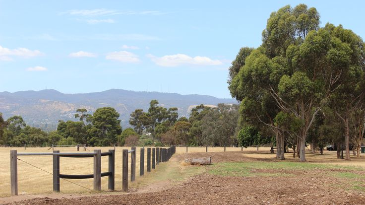 Took this photo using the rule of thirds,line and framing. I like how the fence line turns into the picture as does the dirt track.Iso 200 f8 1/400 sec.