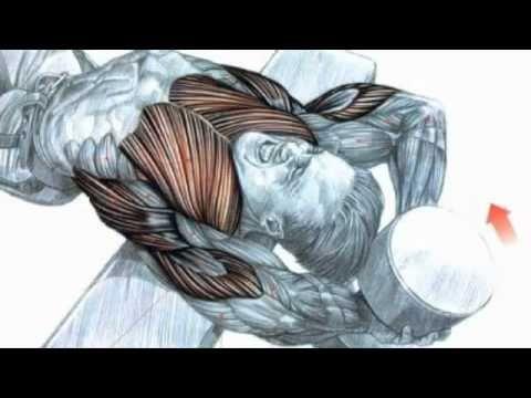 COMO GANAR MASA MUSCULAR -- CRECIMIENTO MUSCULAR EN UN MES - YouTube
