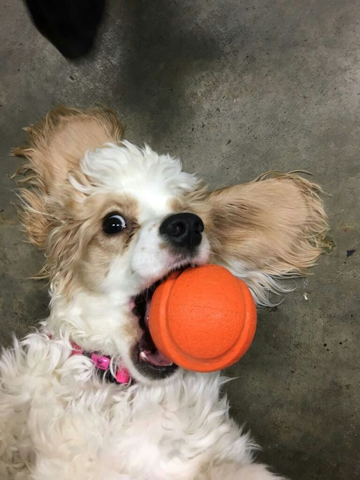 Look I caught the ball!