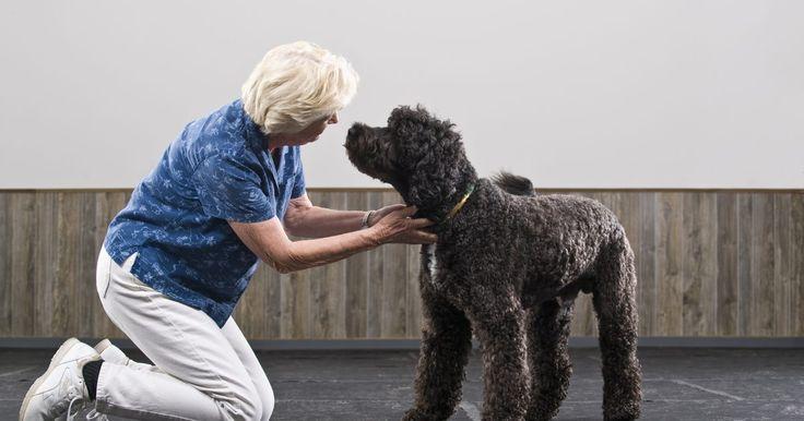 Como cuidar de um cão com lesão nos ligamentos. Pode ser horrível ver o seu cachorro caminhando com dificuldades com três patas por causa de um rompimento nos ligamentos da outra. O animal não aplicará pressão na perna e ficará manco com o passar do tempo. O joelho pode apresentar inchaço. Seu cachorro pode ter rompido o LCA. A sigla significa ligamento cruzado anterior, ele é um tecido ...