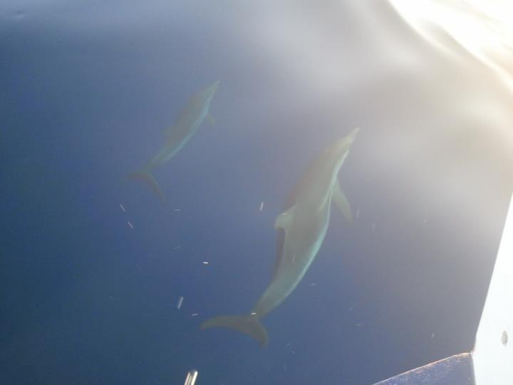 Delfini fotografati durante il viaggio in Mini Crociera (Lipari-Vulcano)