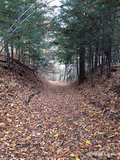 Top 10 Leisure Hikes in the Finger Lakes Region (Upstate New York)