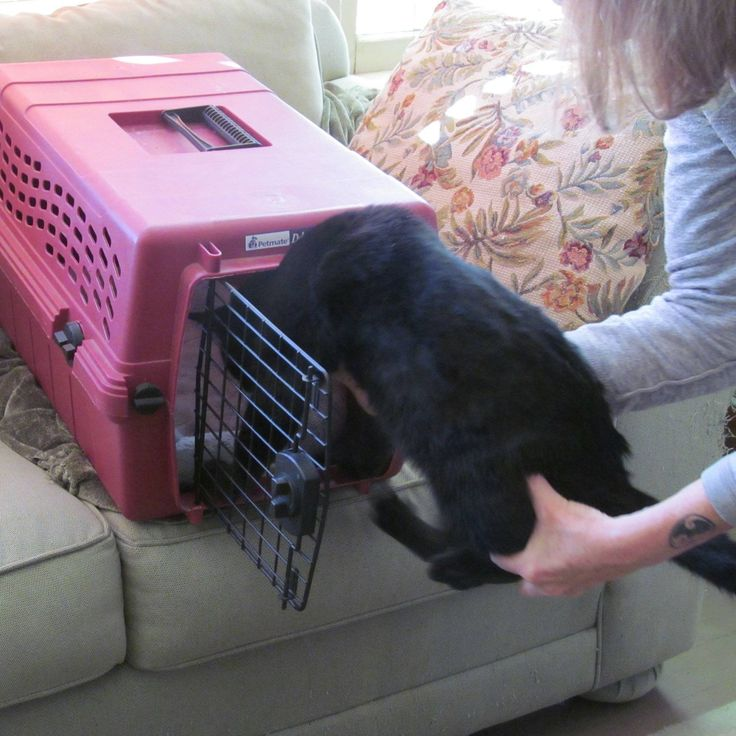 A Great Trick for Getting Kitty Into her Carrier Fancy