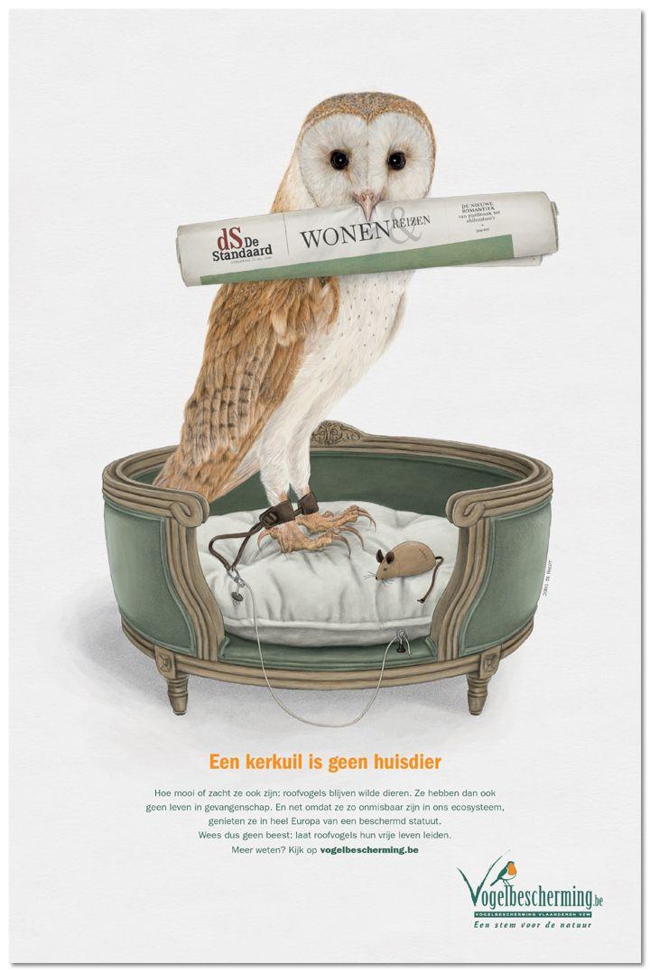 Roofvogels en uilen zijn geen huisdier
