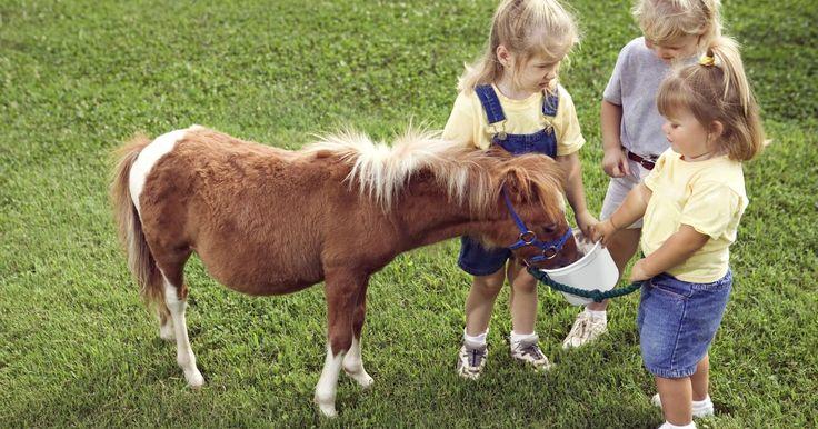 Como transformar uma caixa de papelão em um cavalo. Os cavalos têm papel em diversas aulas temáticas pré-escolares, como caubóis, fazendas, tempos medievais e bichos de estimação. Um jeito divertido de investigar o animal é construindo um modelo. Desenhar e montar um cavalo para a classe a partir de uma caixa de papelão dará às crianças a oportunidade de aprender fazendo e explorar brincando. Eles ...