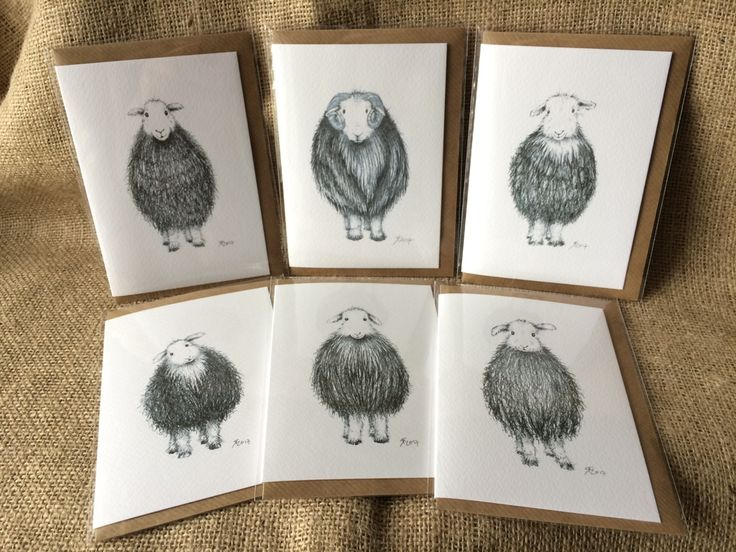 Herdwick sheep cards