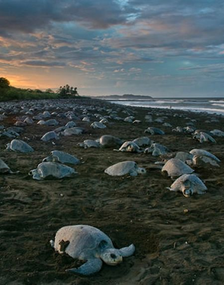 Experience Turtle Watching | Peninsula Papagayo Costa Rica Real Estate