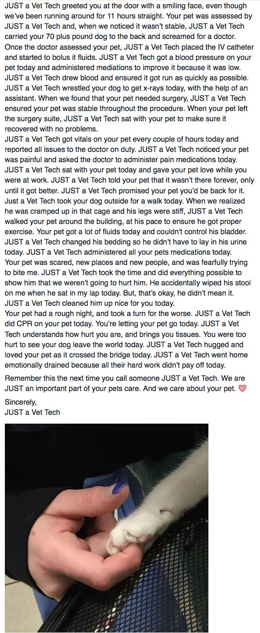 17 Best images about Vet Tech Life on Pinterest | Veterinary ...