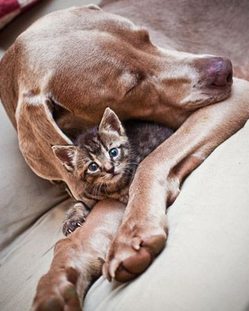 I have a weakness for cuddling cats and dogs.: Sweet Animal, Animal Pet Birds Creatures, Big Brother, Cat Naps, Pet Photo, Baby Dogs, Kittens, New Friends, Baby Cat