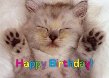 10 best happy birthday images on pinterest online greeting cards animal wallpapersvery cute baby kitten free hd wallpapers images stock photos voltagebd Choice Image