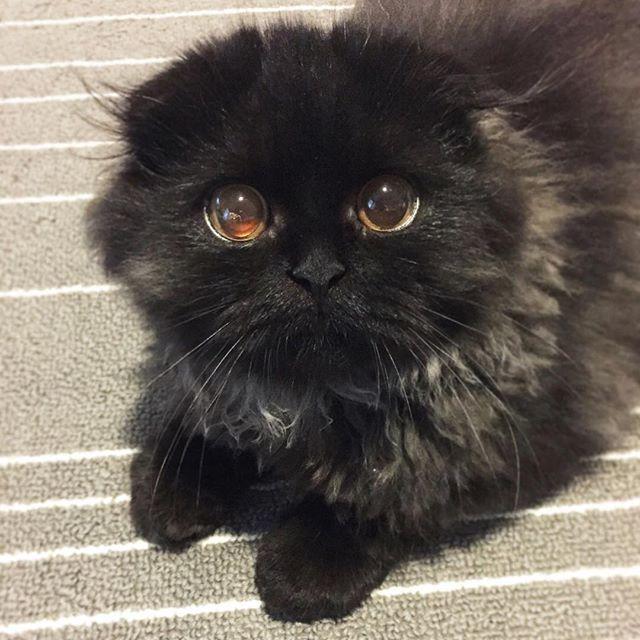 Anstecknadel für später: Treffen Sie Ihre neue Obsession – Gimo die Katze mit den großen Augen   – All Things Pets