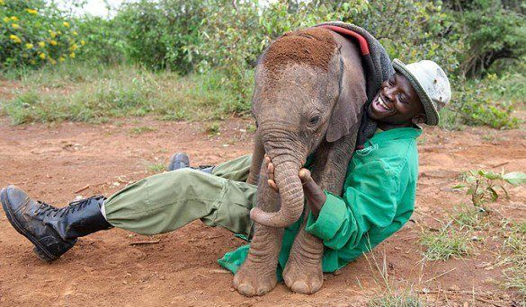 Elephant Orphan And Caregiver At The Dame Daphne Sheldrick