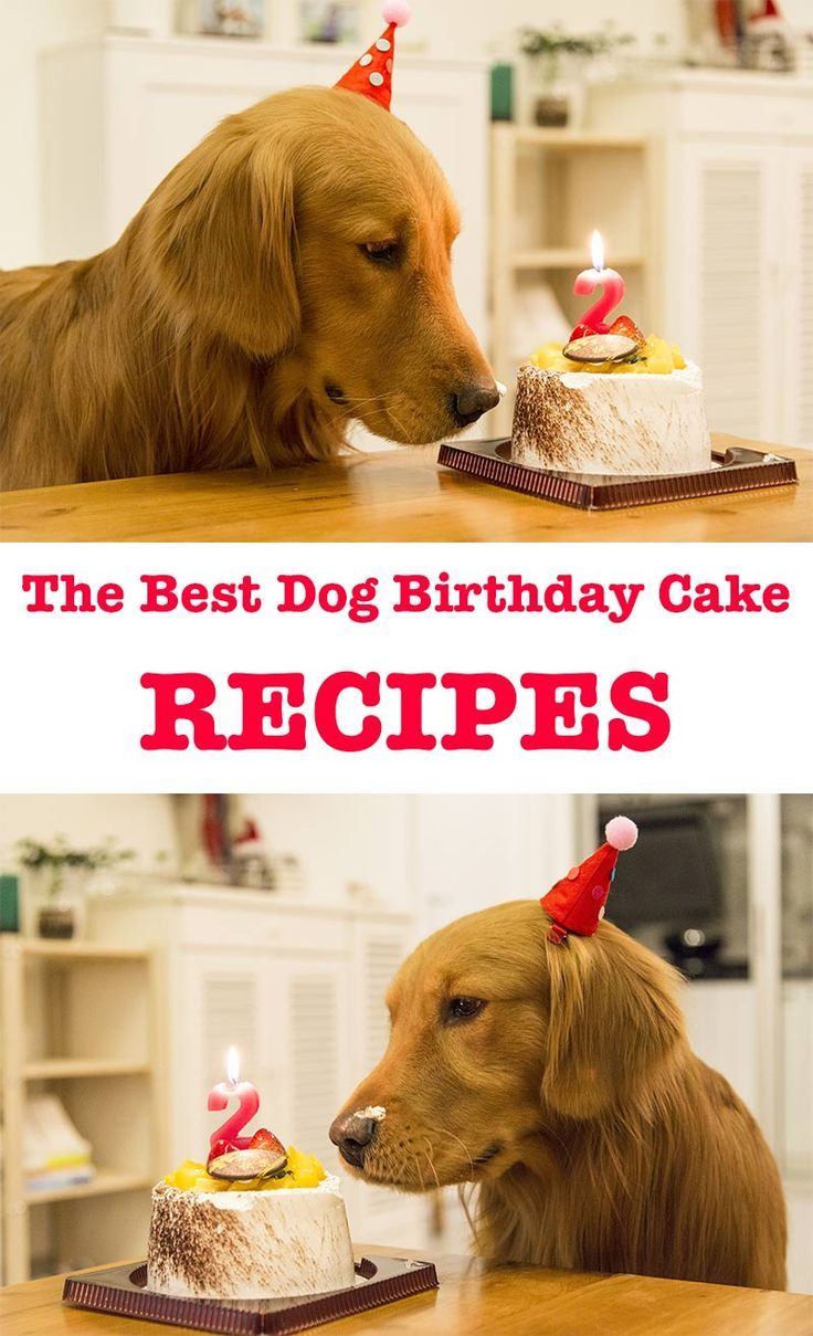 Dog birthday cake recipes for your pups special day dog
