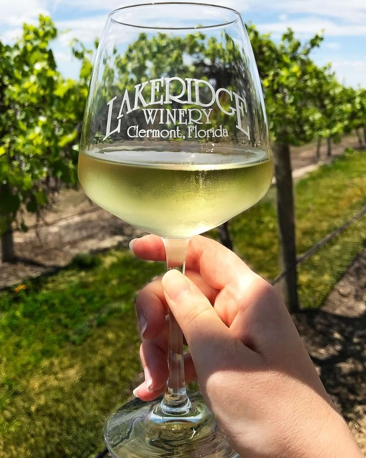 This Winery In Florida Offers FREE Tours And Complimentary