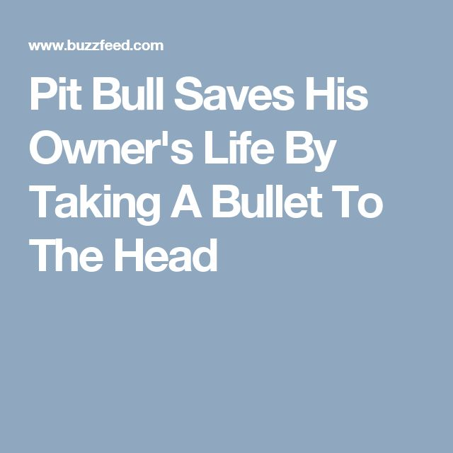 Pit Bull Saves His Owner's Life By Taking A Bullet To The Head