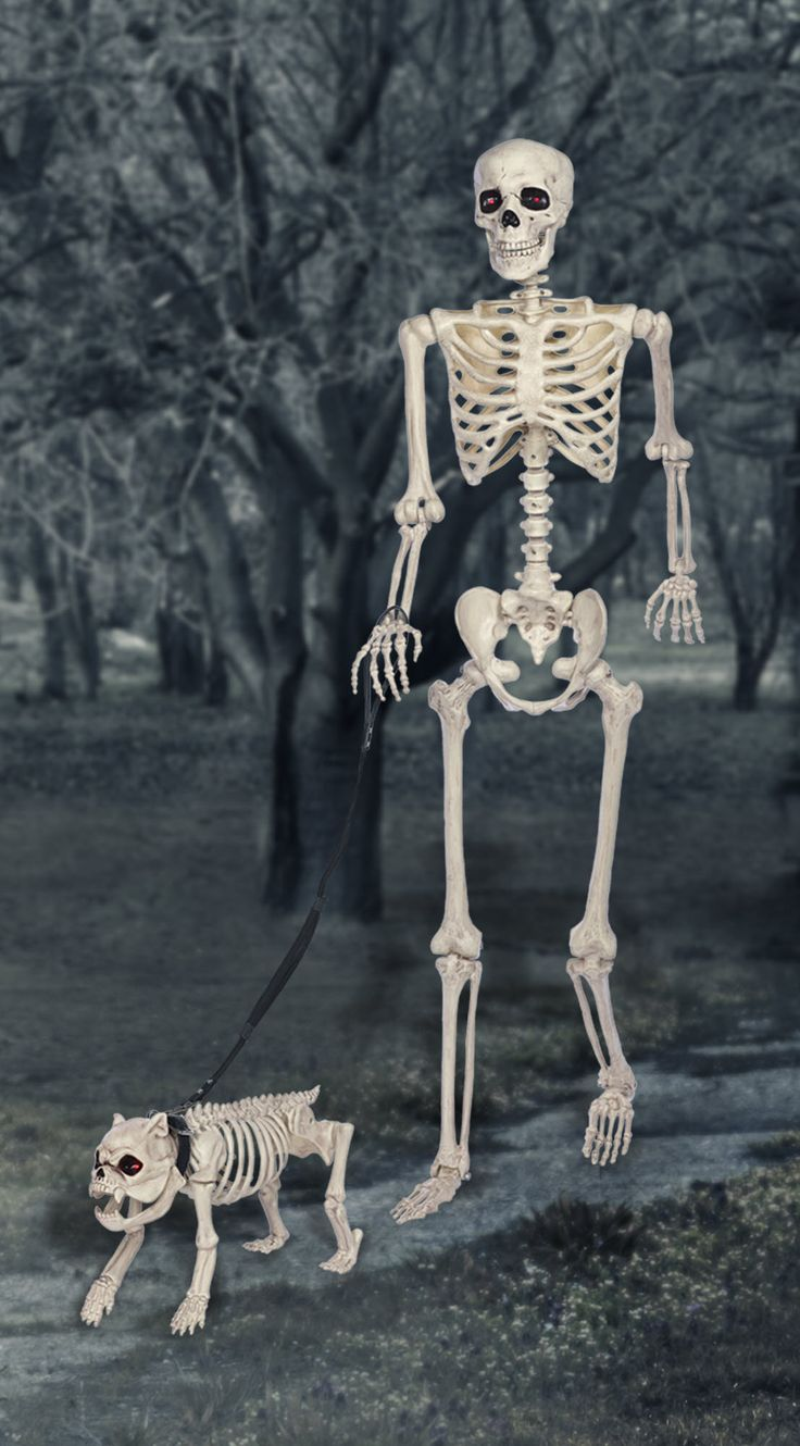 100 best skeletons images on Pinterest | Halloween ...