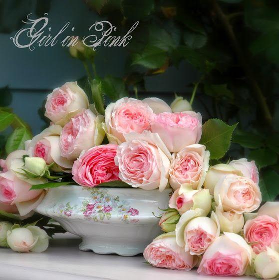 Eden Heirloom Roses